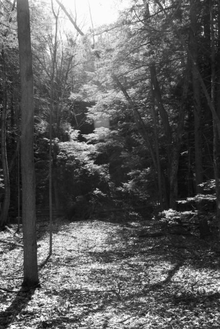 2018 0422 SoBu woods